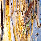 The Tree Bark Collection # 23 - The Magic Tree by Philip Johnson