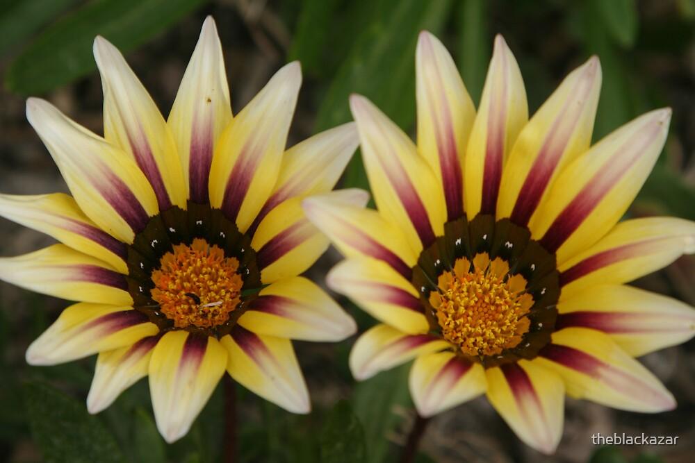 twin suns by theblackazar