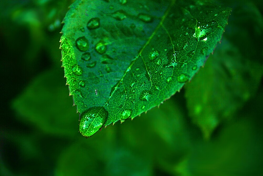 Raindrop Pause by Ken Fortie