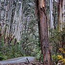 Road to Mt Irvine - Spring 2014 by Bev Woodman