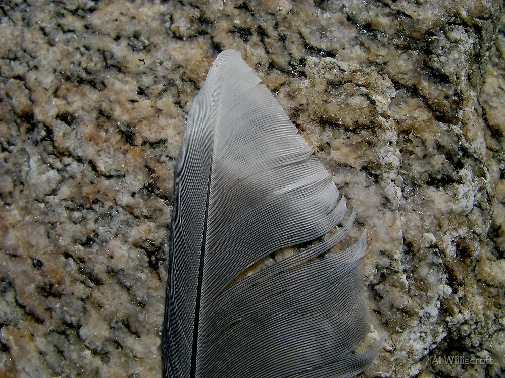Feather by Al Williscroft