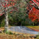 Soft Glow of Red - Mt Wilson NSW Australia by Bev Woodman