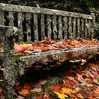 AUTUMN CHAIR - NOOROO, MT WILSON NSW by Bev Woodman