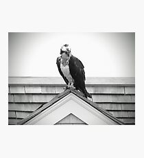 Osprey On Rooftop Photographic Print