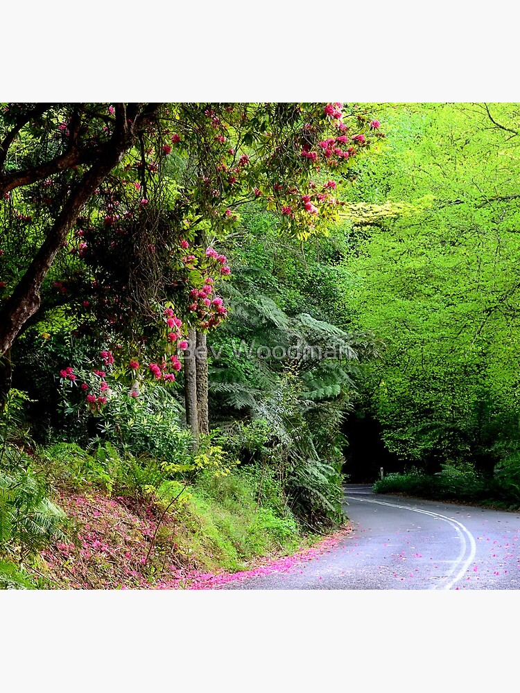 Spring on The Avenue - Mt Wilson NSW by BevW