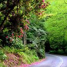 Spring on The Avenue - Mt Wilson NSW by Bev Woodman