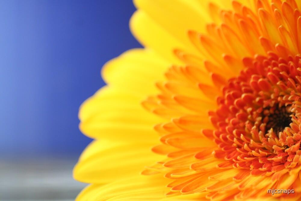 Yellow Gerbera by mjcsnaps