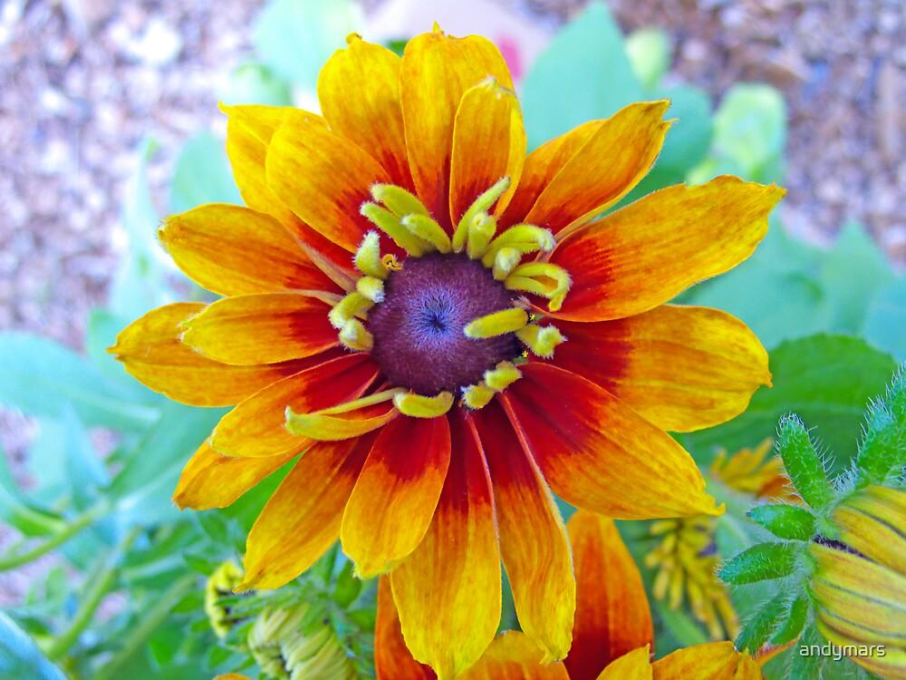Woodstock Flower by andymars