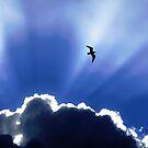 Heaven by Nicholas Averre
