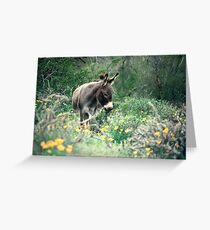 Spring at Pichaco Peak State Park, 103 viewings, 7 comments Greeting Card