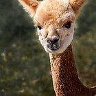 Alpaca by damhotpepper