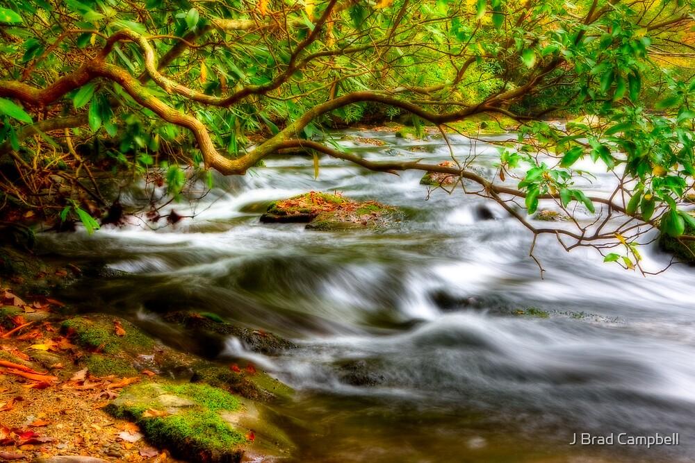Dreamy Creek by J Brad Campbell