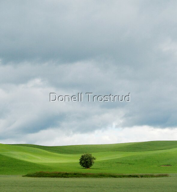 Soli-tree by Donell Trostrud