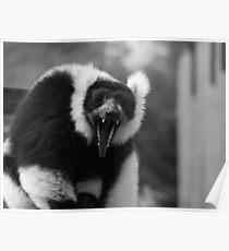 Yawn - black & white Poster