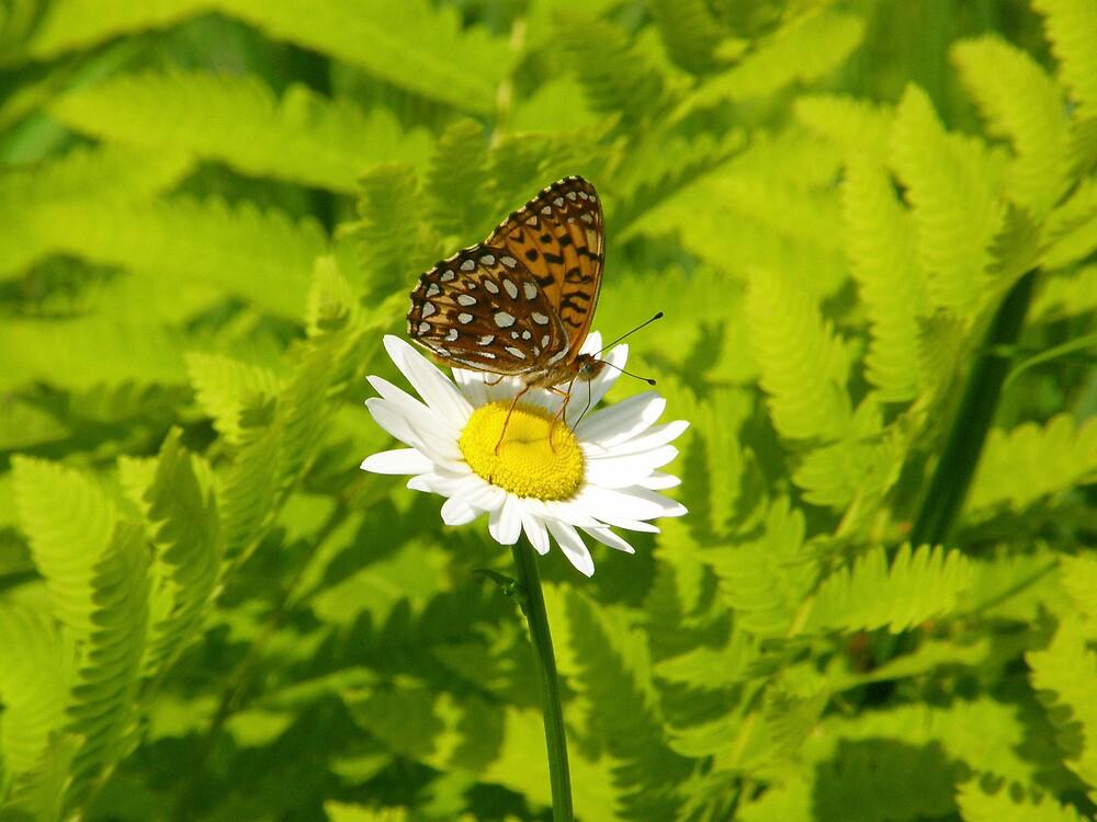 Mini Butterfly by marchello