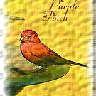 PURPLE FINCH tee by Dayonda