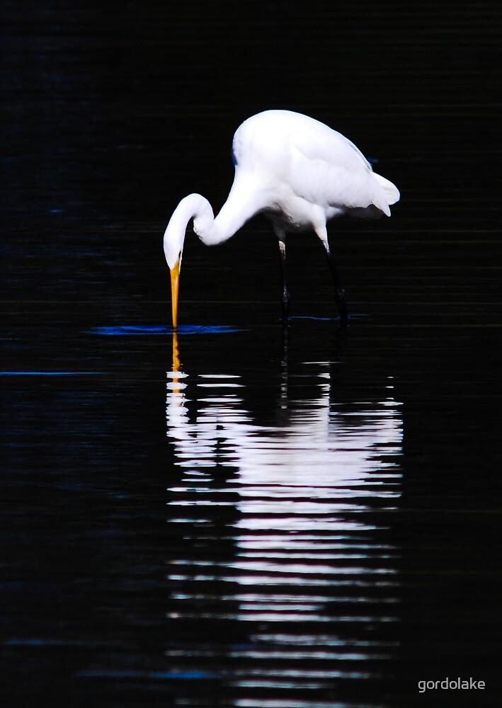 Great Egret by gordolake