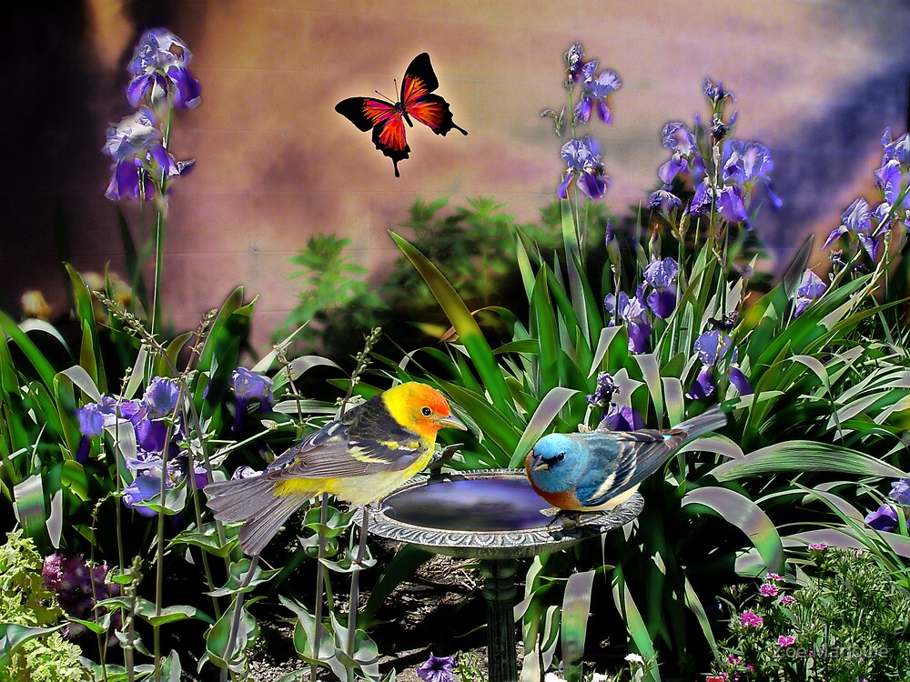 The Birdbath  by Zoe Marlowe
