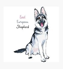 East European Shepherd dog Photographic Print