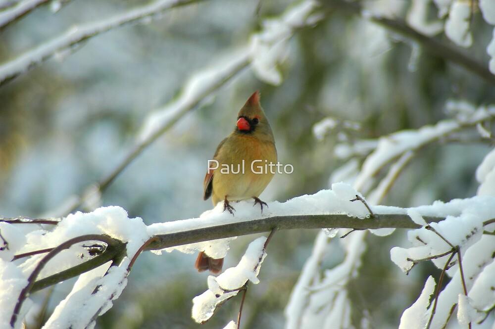 A Beautiful Winter Morning by Paul Gitto