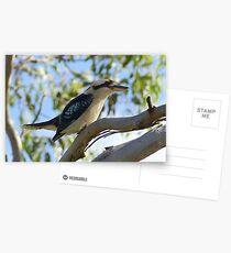 Laughing Kookaburra Postcards