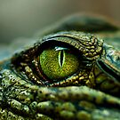 Eye of the Crocodile [Print & iPad Case] by Damienne Bingham