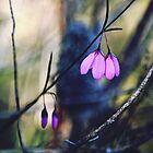 Woodland Bells by Cloudlingpics