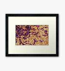 Gravel petals Framed Print