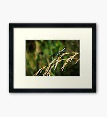 Dragon On Whole Wheat Framed Print