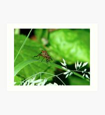 Dance Fly - Empis livida Art Print