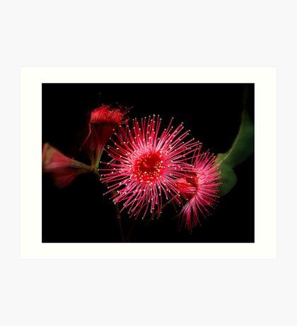 """ Gum Blossom"".. Art Print"