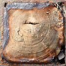 rust and grain by Wrigglefish
