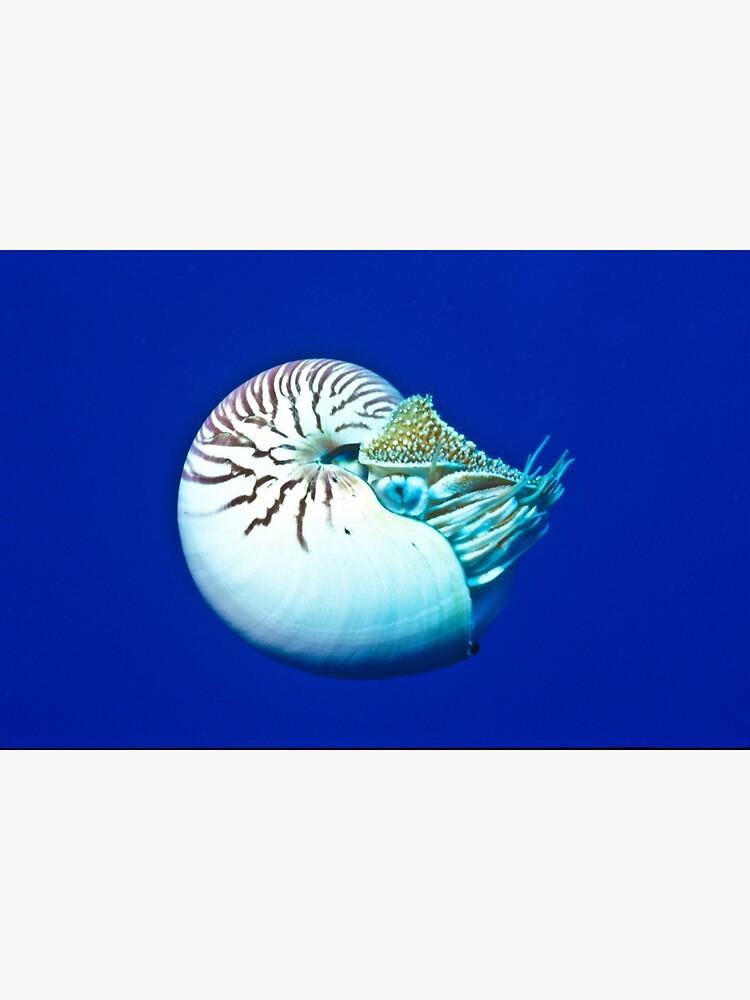Nautilus by DavidWachenfeld
