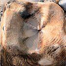 woodpool by Wrigglefish