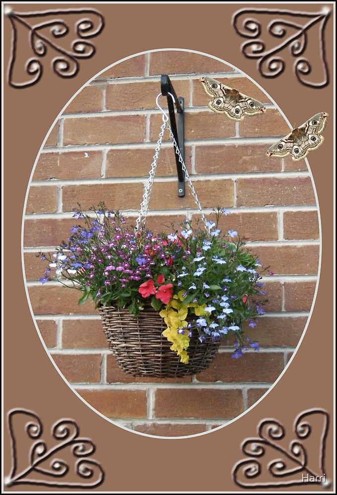 Hanging Basket by Harri
