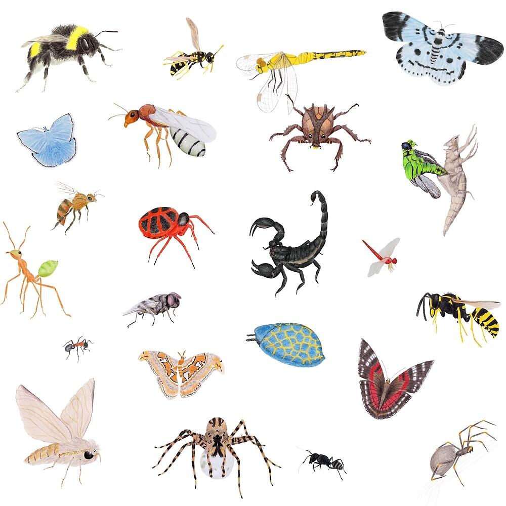 Bugs by Linda Ursin