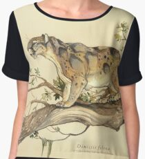 NATURAL HISTORY - Dinictis felina Women's Chiffon Top