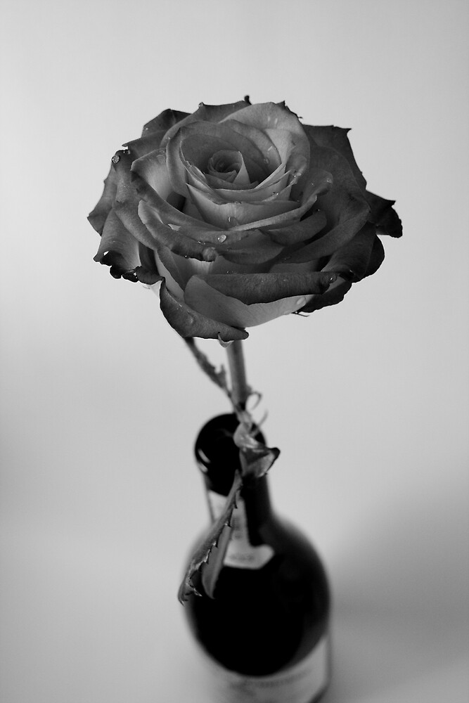 Rose in a Wine Bottle by Kim McRae