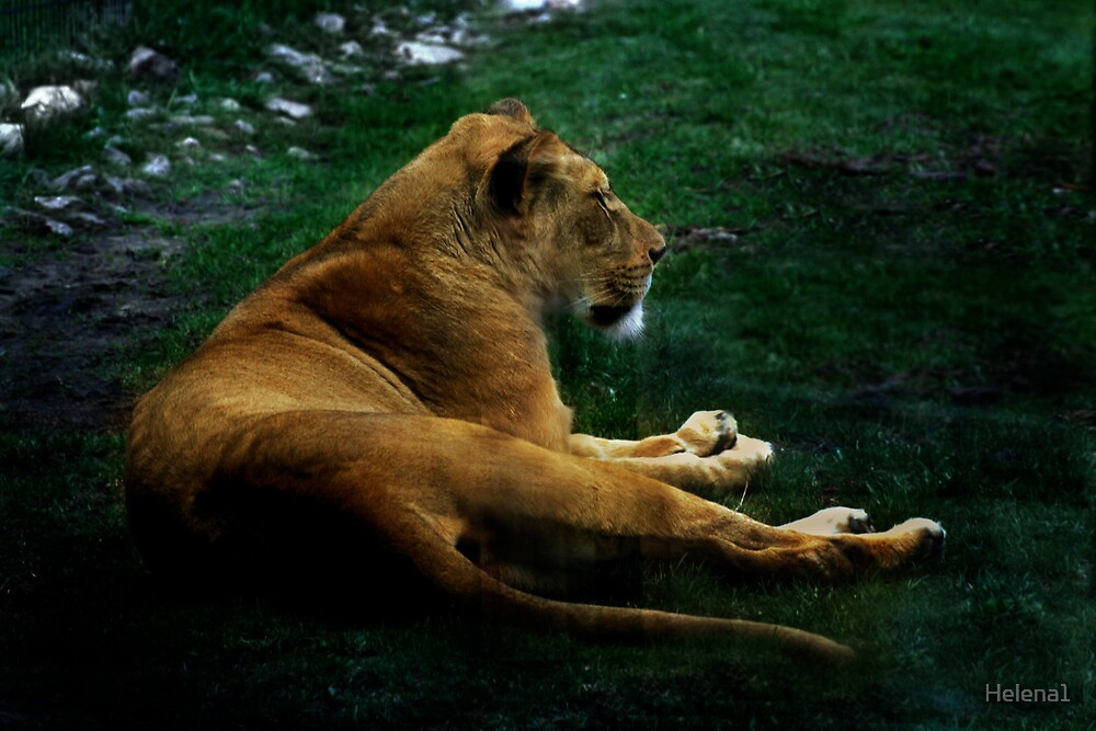 Lioness by Helena1