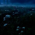 Foggy Forest Meadow at Night by Imi Koetz