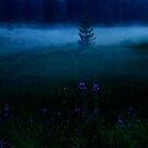 Foggy Night in the Black Forest by Imi Koetz
