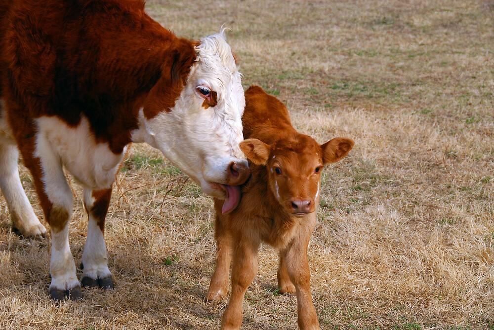 A Mothers Love by Robert Serpan