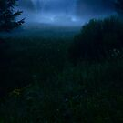 Foggy Swamp at night by Imi Koetz