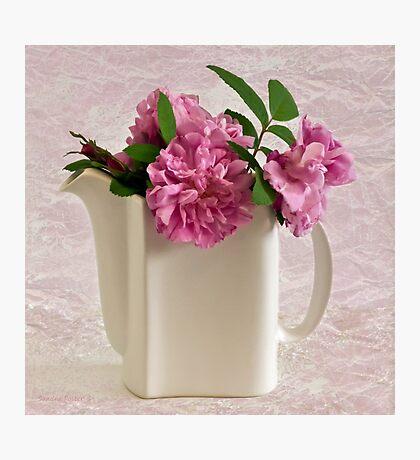 Hansa Rose Tea Photographic Print
