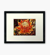 Petals Aflame Framed Print