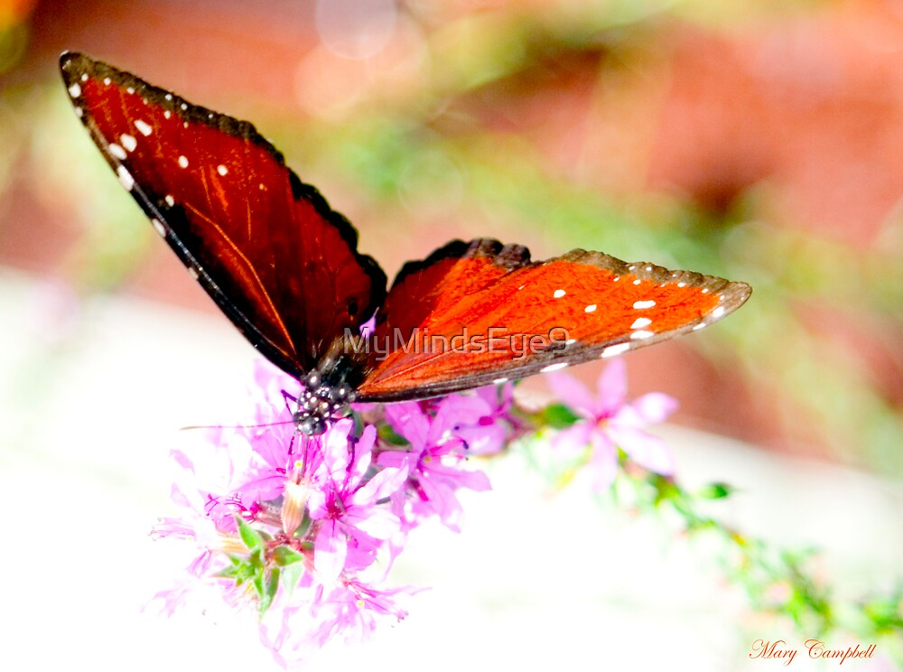 Brown Butterfly by Mary Campbell
