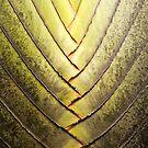 Leaf pattern by Juha Sompinmäki