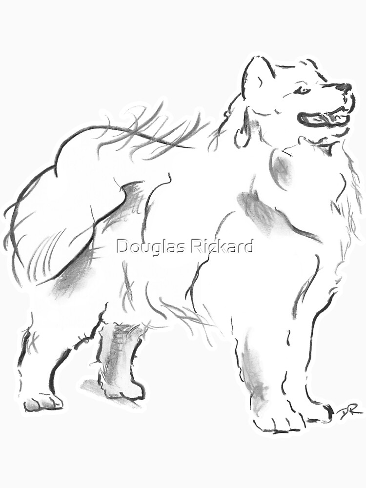 Samoyed Drawing by douglasrickard