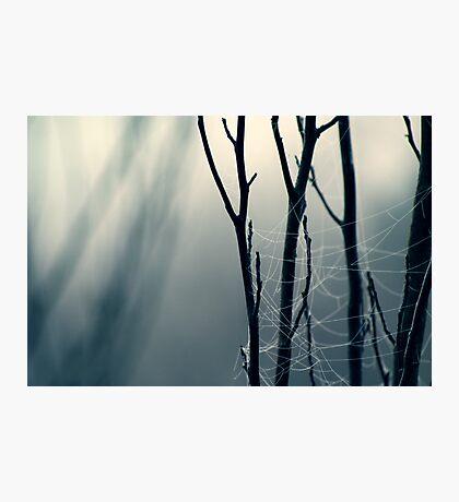 Moonlit Lattice Photographic Print