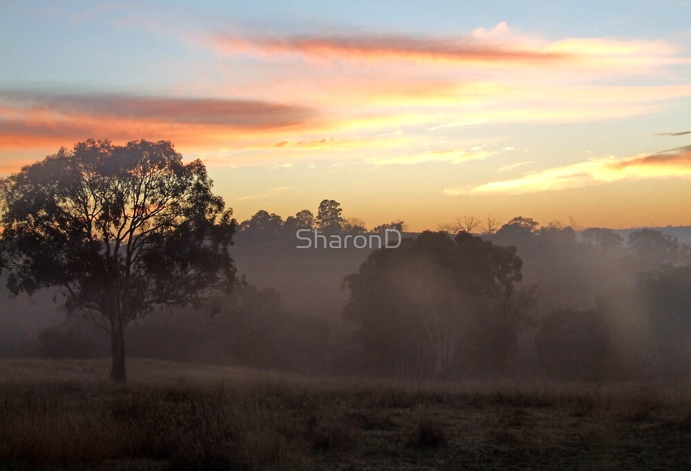 Foggy Sunrise by SharonD
